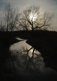 plecy zaświecający drzewo Obraz Royalty Free