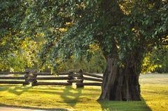 plecy zaświecający drzewo zdjęcia stock