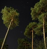 Pleiades open star cluster on night sky over green forest stock image