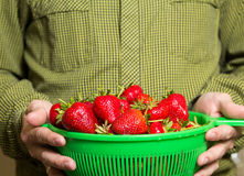 Plein bol de fraises juteuses rouges dans un man& x27 ; main de s Images stock