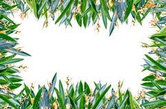 Plein cadre de fleur photo libre de droits