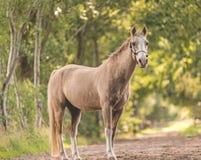 Plein corps de cheval Images stock