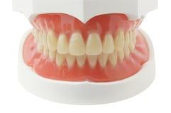 Plein dentier Photos stock