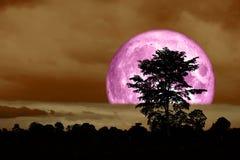 plein dos rose superbe de lune au-dessus d'arbre de silhouette en ciel nocturne Photos libres de droits