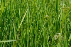 Plein fond de cadre de belle photo d'herbe verte macro Images libres de droits