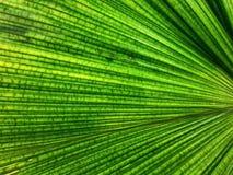 Plein fond de cadre de texture en feuille de palmier verte photo libre de droits