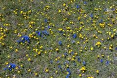 Plein fond de fleurs Image libre de droits