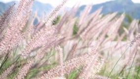 Plein HD-1080x1920p Clip vidéo, plan rapproché - fond de fleur d'herbe de nature clips vidéos