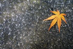 Plein jaune de congé d'automne sur une terre brune en automne image libre de droits