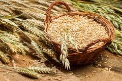Plein panier de grain Photo stock