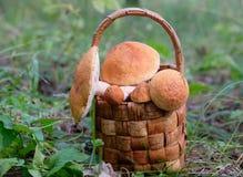 Plein panier des champignons Photo stock