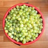 Plein seau de raisins blancs pour faire le vin photographie stock libre de droits