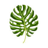 Pleine feuille de palmier de monstera, illustration de vecteur illustration stock