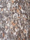 Pleine fin texturisée approximative criquée de cadre d'écorce texturisée grise et orange de pin photographie stock