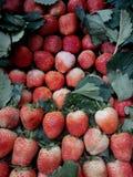 Pleine fraise douce fraîche rouge en Thaïlande Photo libre de droits