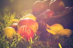 Pleine lumière de coucher du soleil d'herbe de fruits de panier Images stock