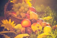 Pleine lumière de coucher du soleil d'herbe de fruits de panier Image libre de droits
