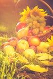 Pleine lumière de coucher du soleil d'herbe de fruits de panier Image stock
