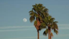 Pleine lune au crépuscule avec des palmiers banque de vidéos