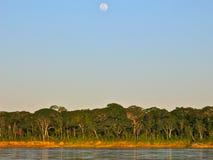 Pleine lune au-dessus de l'Amazone Photos libres de droits