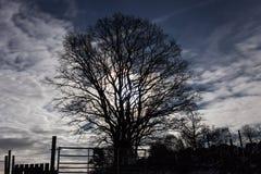 Pleine lune brillant par des nuages et des branches photo stock