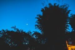 Pleine lune et branches d'arbre photo libre de droits