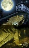 Pleine lune et lézard images libres de droits