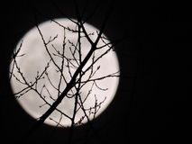 Pleine lune qui est vue par des branches d'arbre Photographie stock libre de droits