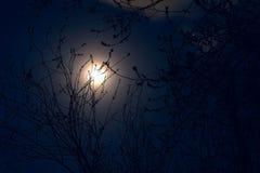 Pleine pleine lune de lune en mai - dans le ciel nocturne et les silhouettes de Photo libre de droits