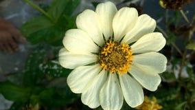 Pleines fleurs de couleur Images stock
