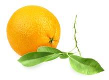 Orange et branche avec la feuille verte Image libre de droits