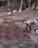 Plemienna kobieta uprawia ziemię w jej kuchennym ogródzie Zdjęcia Royalty Free