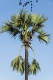 Plemienny mężczyzna na tadi drzewie Fotografia Royalty Free