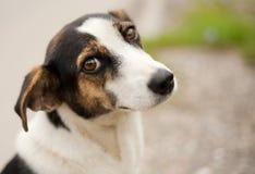 plenerowa śliczna psina zdjęcia royalty free