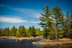 Plenerowego pustkowia lasu Jeziorny krajobraz Fotografia Royalty Free