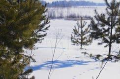 Plenerowej drewno wiosny odbicia sezonu śnieżnej drewnianej jeziornej błękitnej sceny nieba biali marznący drzewa oszronieją wodn Obraz Stock