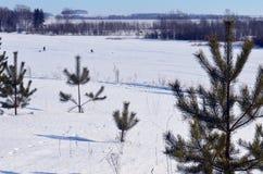 Plenerowej drewno wiosny odbicia sezonu śnieżnej drewnianej jeziornej błękitnej sceny nieba biali marznący drzewa oszronieją wodn Zdjęcia Royalty Free