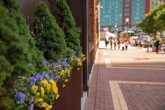Plenerowi kwiaty na Atlantyk Ave Boston Massachusetts U S fotografia stock