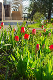 Plenerowi Ogrodowi tulipany Fotografia Royalty Free
