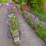 Plenerowi schodki i rampa z poręczami i kwiatami obraz royalty free