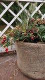 Plenerowy flowerpot przeciw ogrodzeniu Zdjęcia Royalty Free