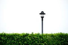 Plenerowy ogrodowy lampy i rośliny krzak Fotografia Stock
