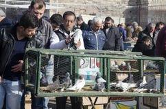 Plenerowy ptaka rynek w Istanbuł Zdjęcia Royalty Free