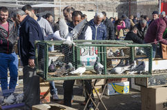 Plenerowy ptaka rynek w Istanbuł Obrazy Royalty Free