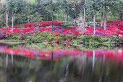 Plenerowy zbocze azalii ogródu wody odbicia SC zdjęcie stock