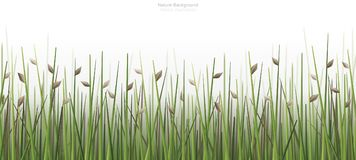 Plenerowy zieleni pola tło odizolowywający na bielu royalty ilustracja