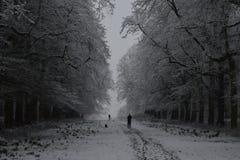 Pleno invierno triste foto de archivo