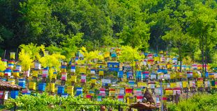A plenty of beehive. Different colour beehives on a green hill Stock Image