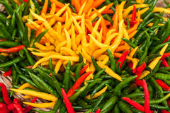 Plenty of colorful of chili Royalty Free Stock Image