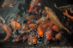 Plenty of colorful Koi fish Stock Photo